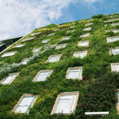 пълзящи растения по фасадата