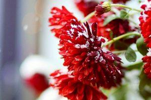 цветята през зимата апратамент