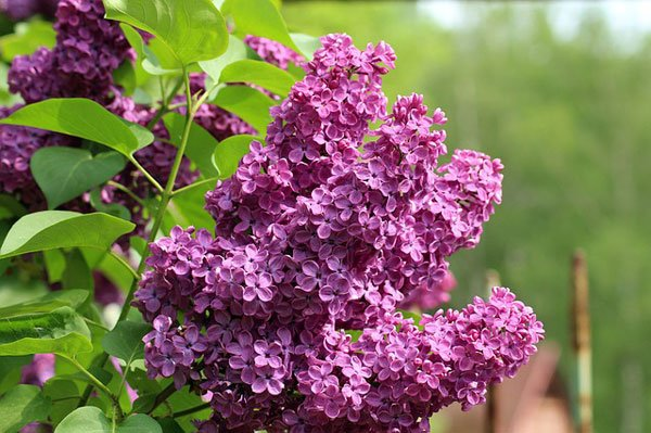 градината-през-май