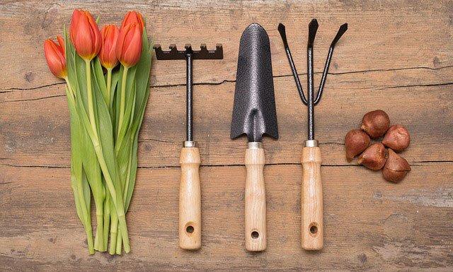 какво-да-свършите-в-градината-през-май-1