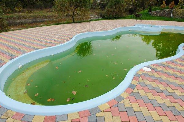 грижа за водоемите в двора след зимата